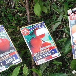 果樹を植えてみた