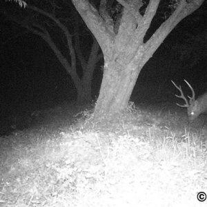 トレイルカメラで撮影出来た動物