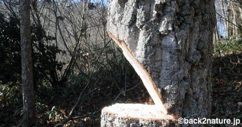 木の伐採をする