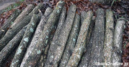 【2019年】原木しいたけの仕込み