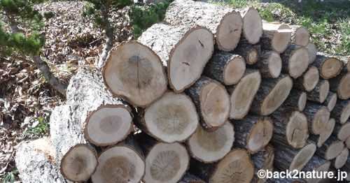 春の薪作り